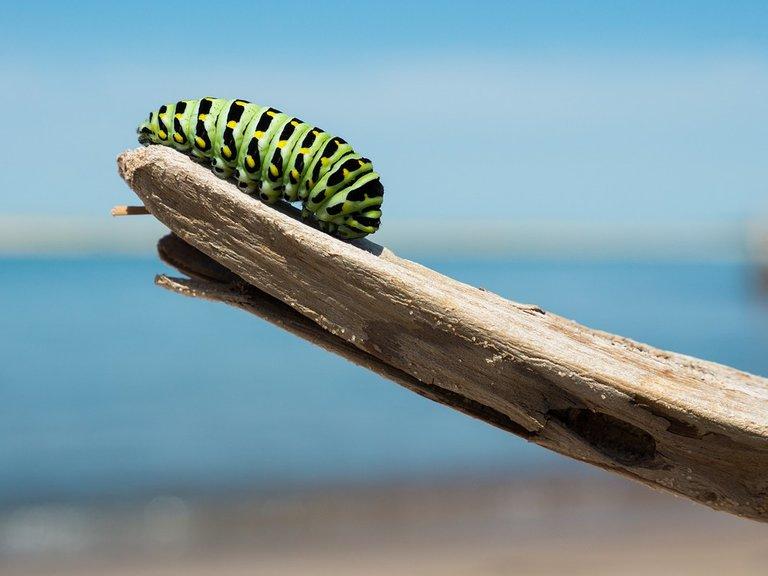 caterpillar1209834_960_720.jpg