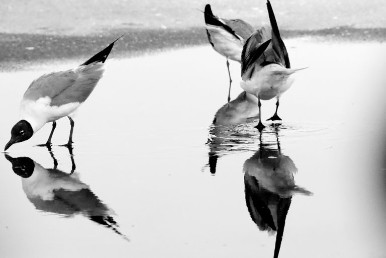 0p2a9909_seagulls.jpg