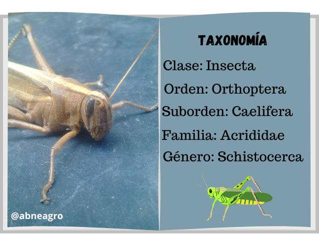 Taxonomía 1.png