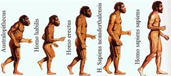 (evolucion del hombre.png