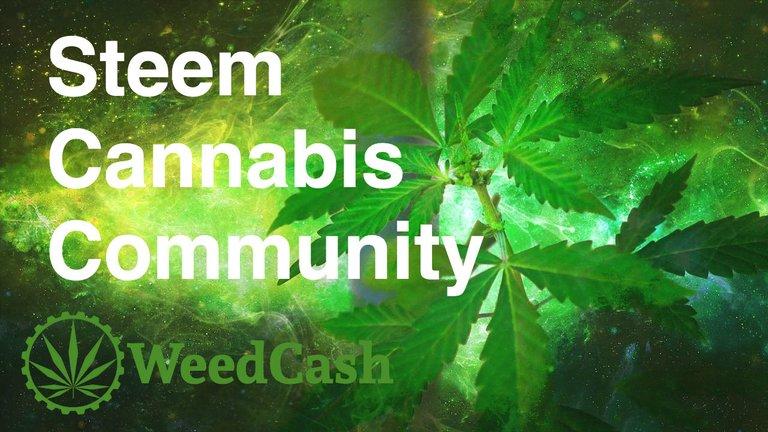 cannabis-steem-community.jpg