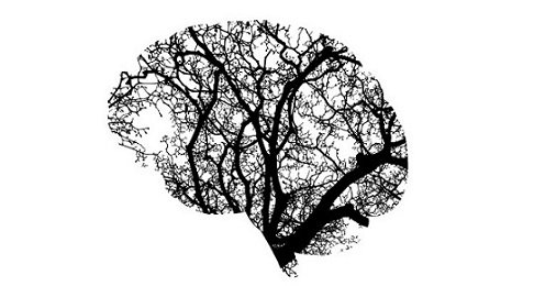 Neuroplasticity - BS.jpg