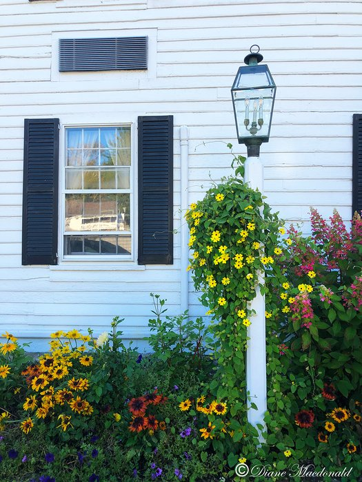 lamppost and flowers.jpg