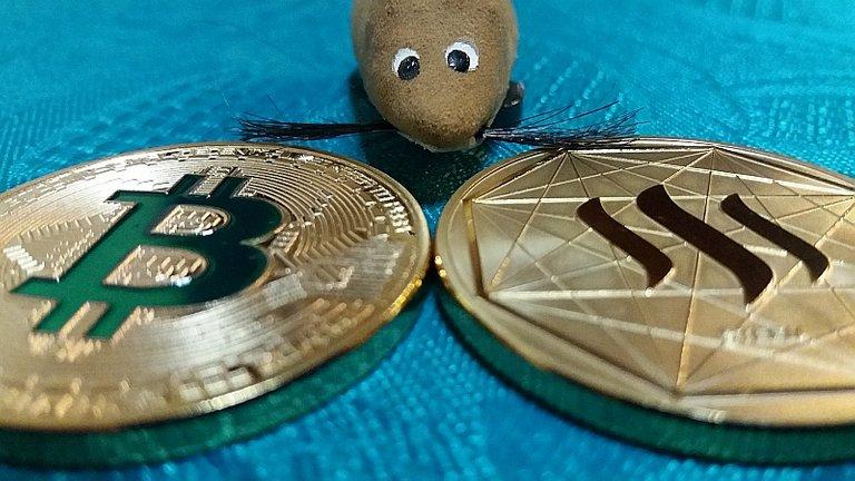 0014 Steem Bitcoin choice coins mouse.jpg