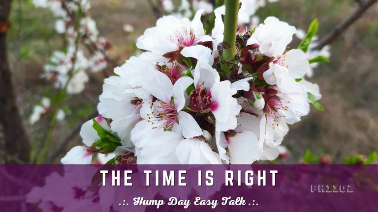 The Time is Right  Hump Day Easy Talk.jpg