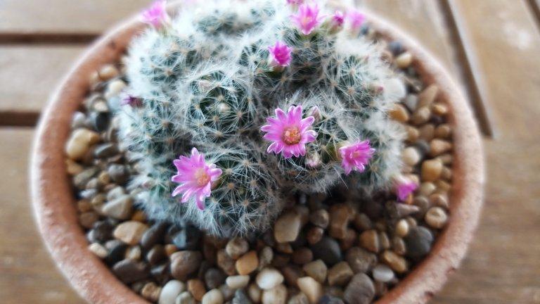leaves_cactus_kohsamui99_144.jpg