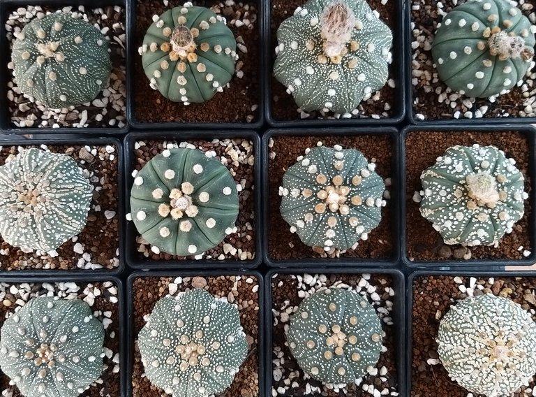 leaves_cactus_kohsamui99_189.jpg