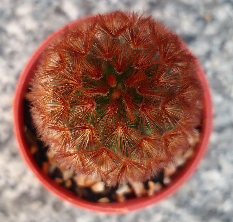 leaves_cactus_kohsamui99_163.jpg