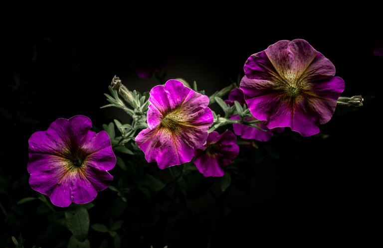 2021_07_17_flowermom_75_lr_2.jpg