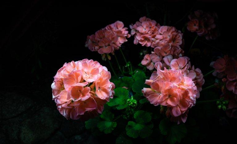 2021_07_17_flowermom_66_lr_2.jpg