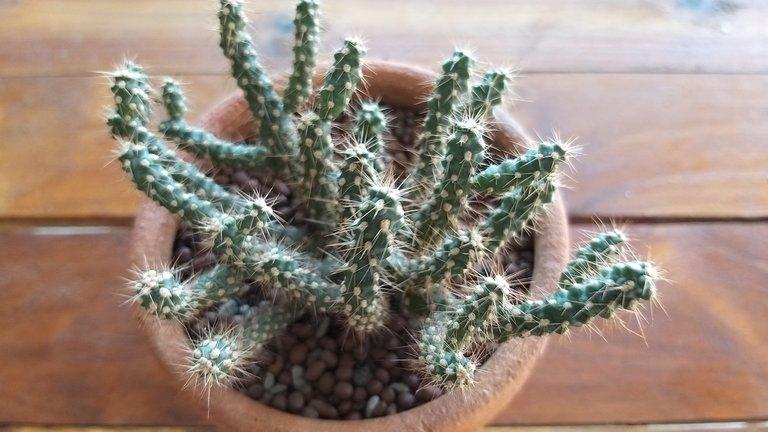 leaves_cactus_kohsamui99_146.jpg