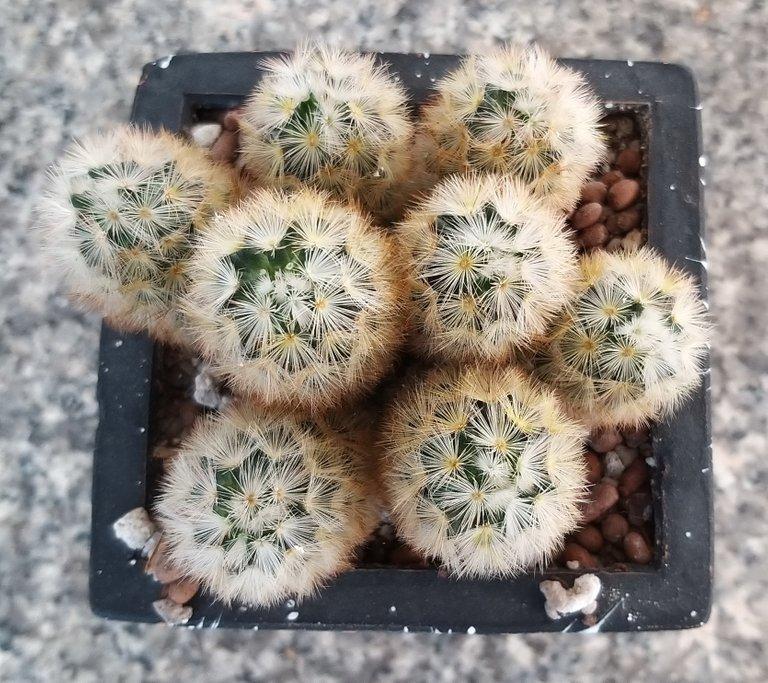 leaves_cactus_kohsamui99_159.jpg