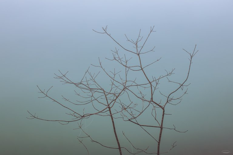 Dense Fog behind the Branches