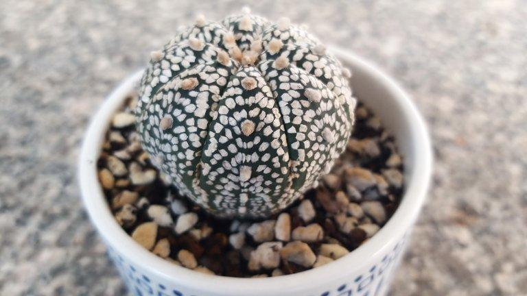 leaves_cactus_kohsamui99_155.jpg