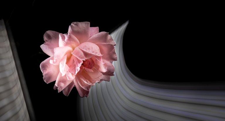 2021_07_17_flowermom_33_lr_2.jpg