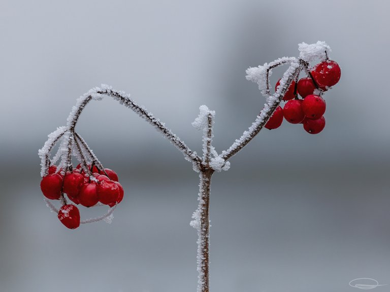 Fruits - red and frozen