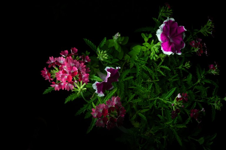 2021_07_17_flowermom_99_lr_2.jpg