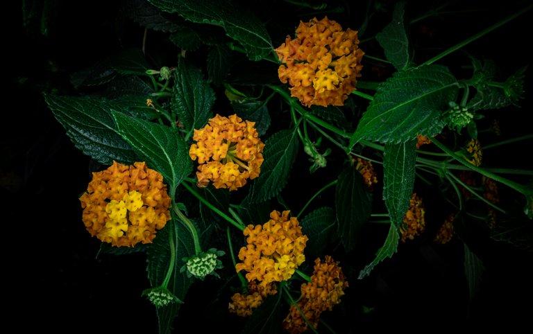 2021_07_17_flowermom_17_lr_2.jpg