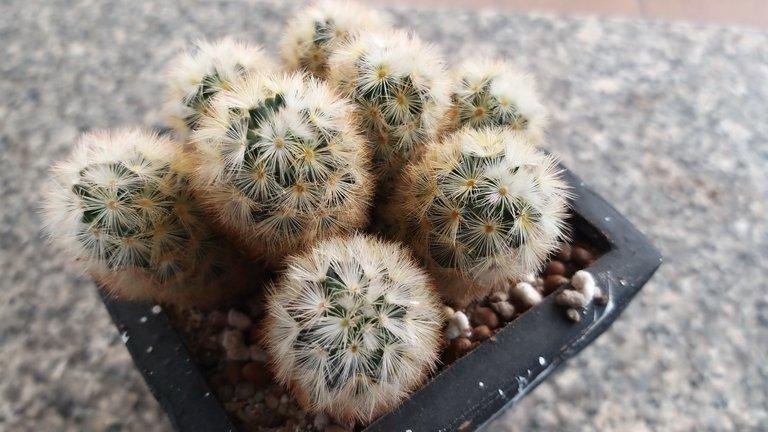 leaves_cactus_kohsamui99_161.jpg
