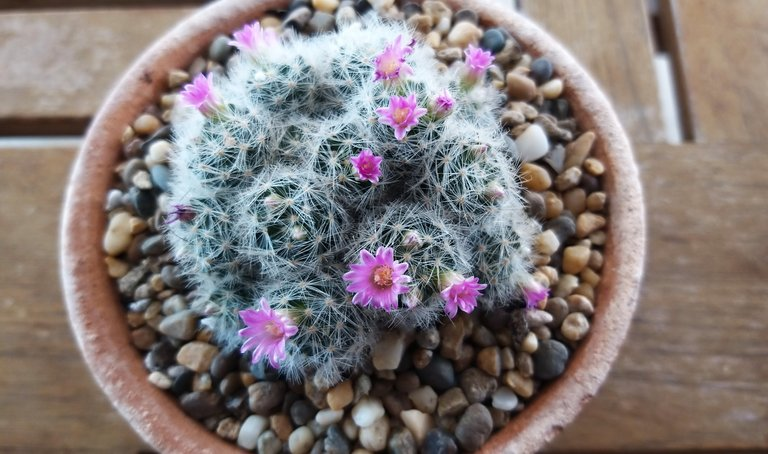 leaves_cactus_kohsamui99_143.jpg