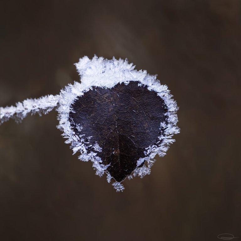 Frozen Heart Leaf