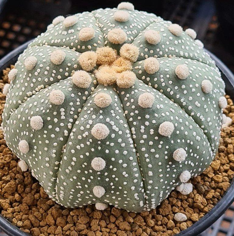 leaves_cactus_kohsamui99_241.jpg