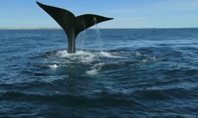 02.-Whales in Patagonia-0.jpg