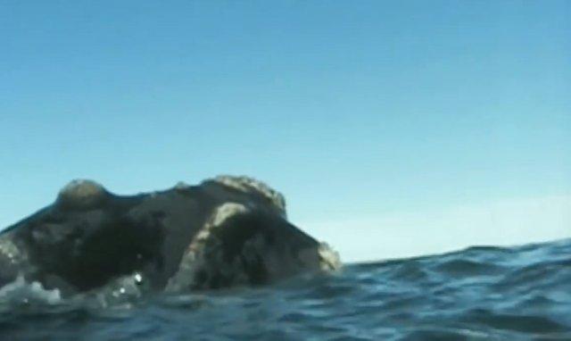 02.-Whales in Patagonia-5.jpg