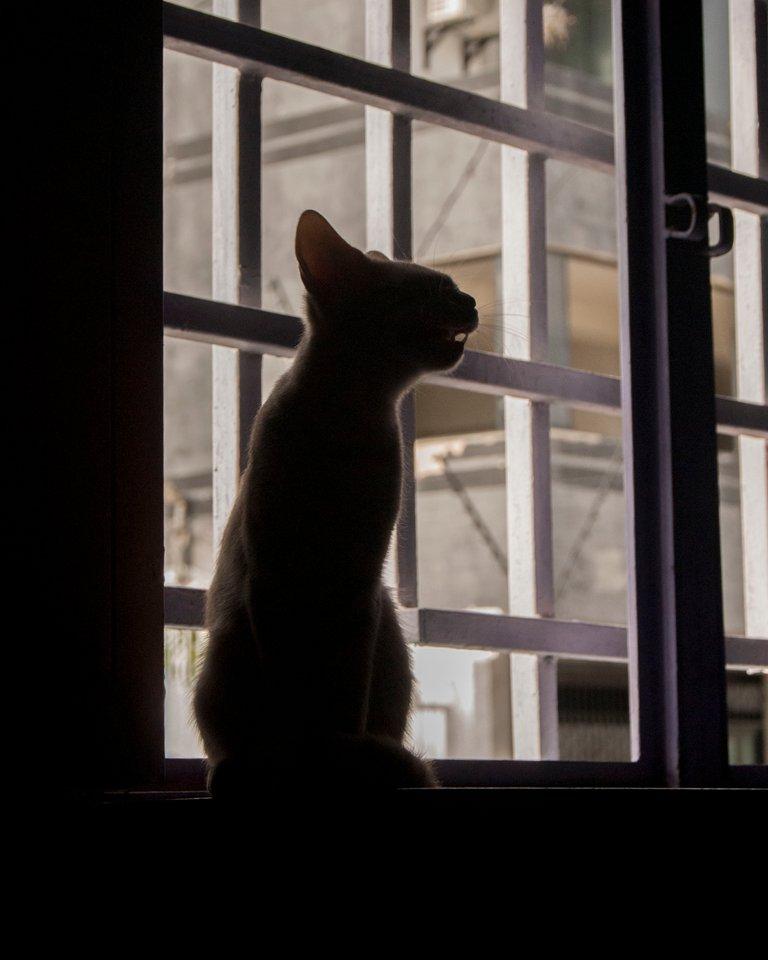 cat23.jpg