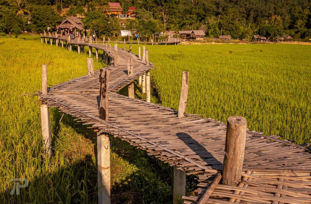 Comfortable bamboo bridge walk over rice paddies