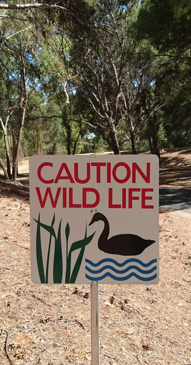 Caution Wild Life