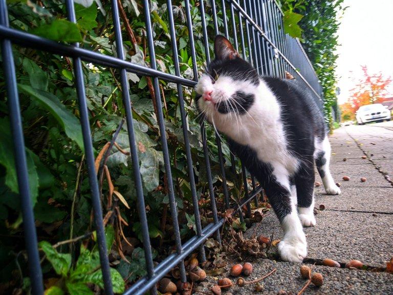 kitty fence rub