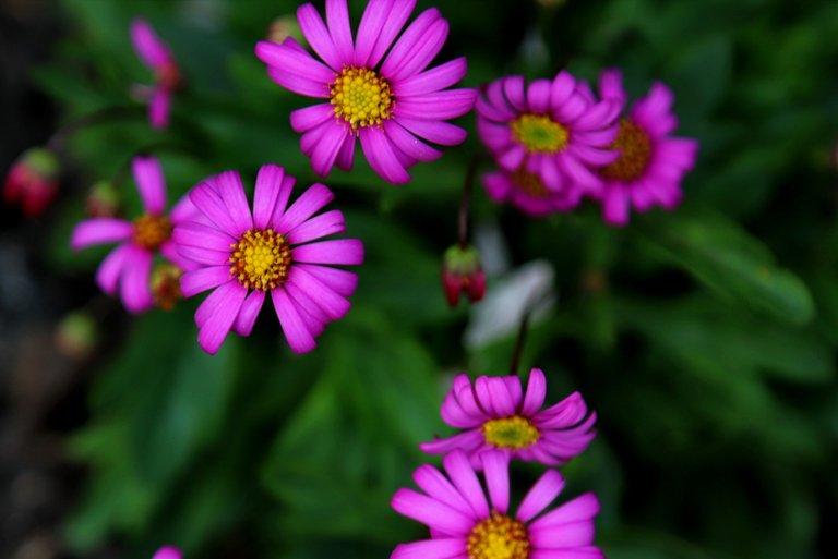 IMG_1506 purple flowers.JPG