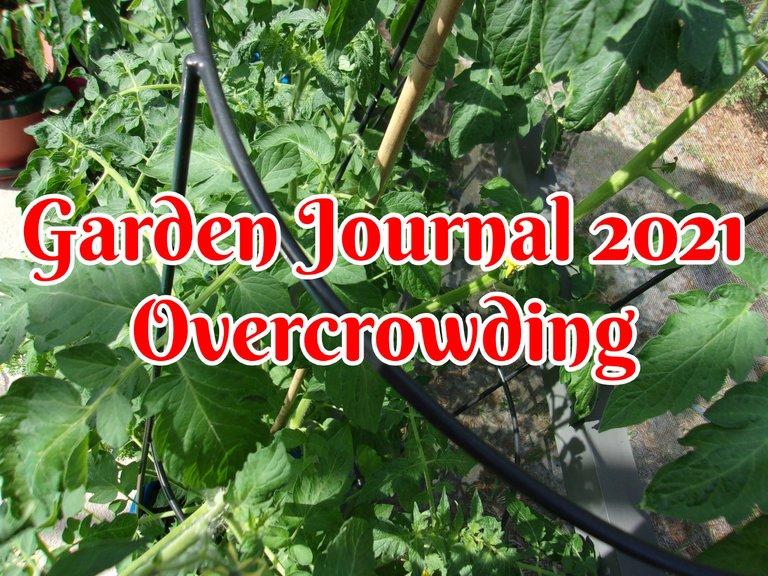 April garden 2021.jpg