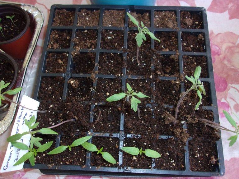peppers 1.jpg