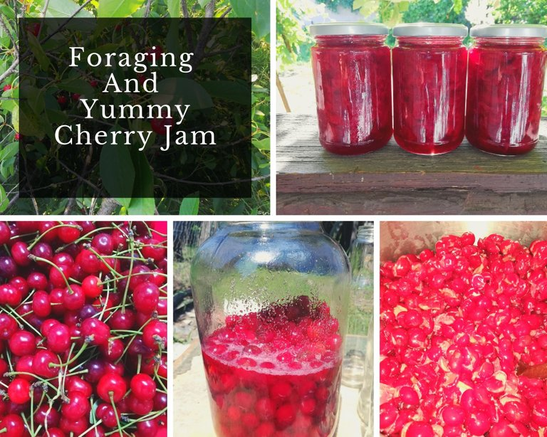 Foraging And Yummy Cherry Jam.jpg