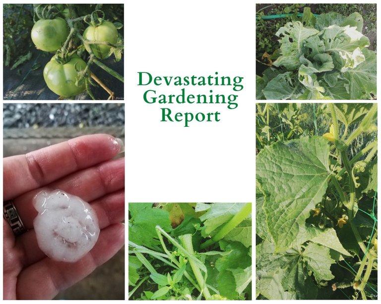Devastating Gardening Report.jpg