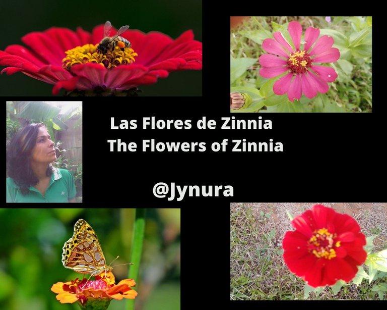 Las Flores de Zinnia  The Flowers of Zinnia (1).jpg