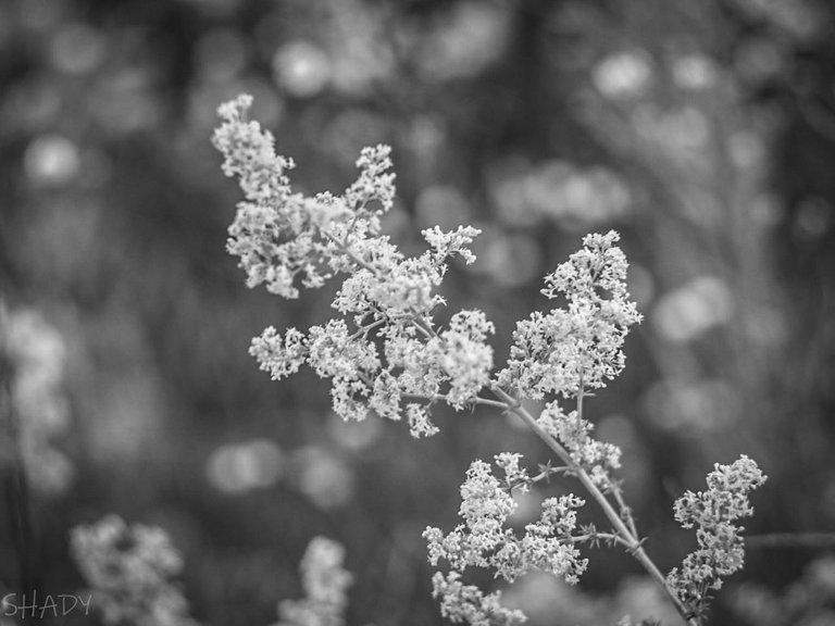 монохромні квіти 3.jpg