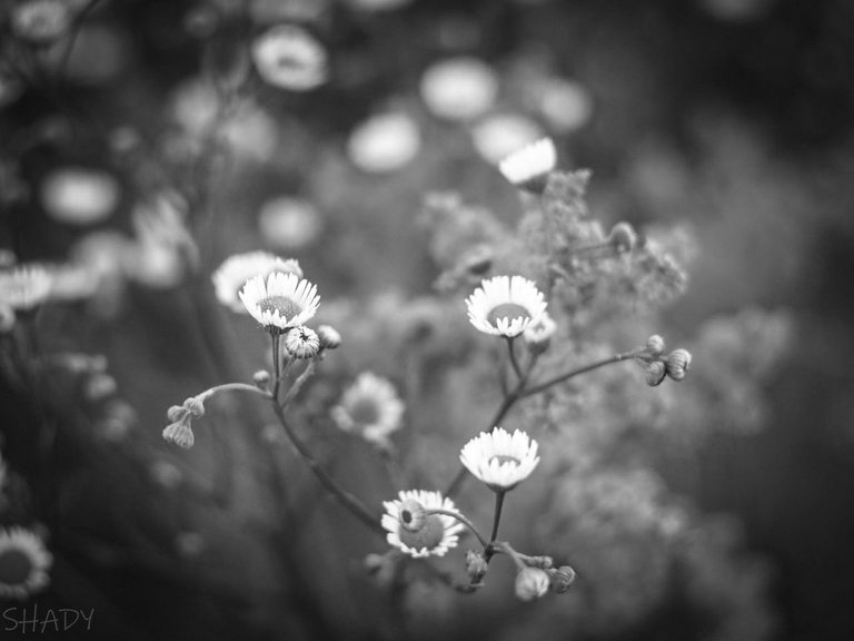 монохромні квіти 4.jpg