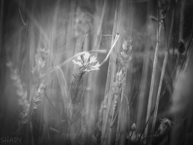 монохромні квіти 2.jpg