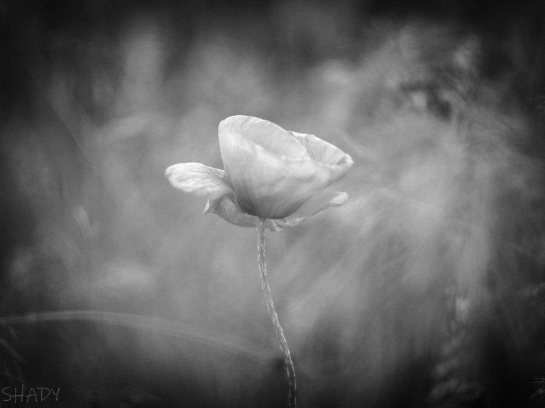 монохромні квіти 1.jpg