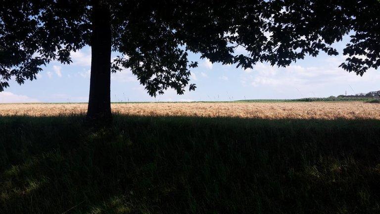 Sommer 2020 Natur Sonne Urlaub zuhause regional 12.JPG