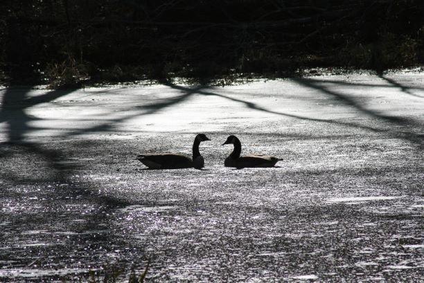 Love Birds Silhouette thumbnail.JPG