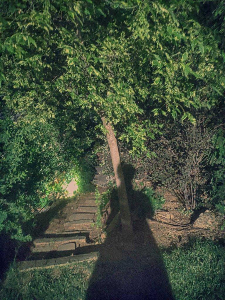 shadow-hunters-christina-madart-20200718.jpg