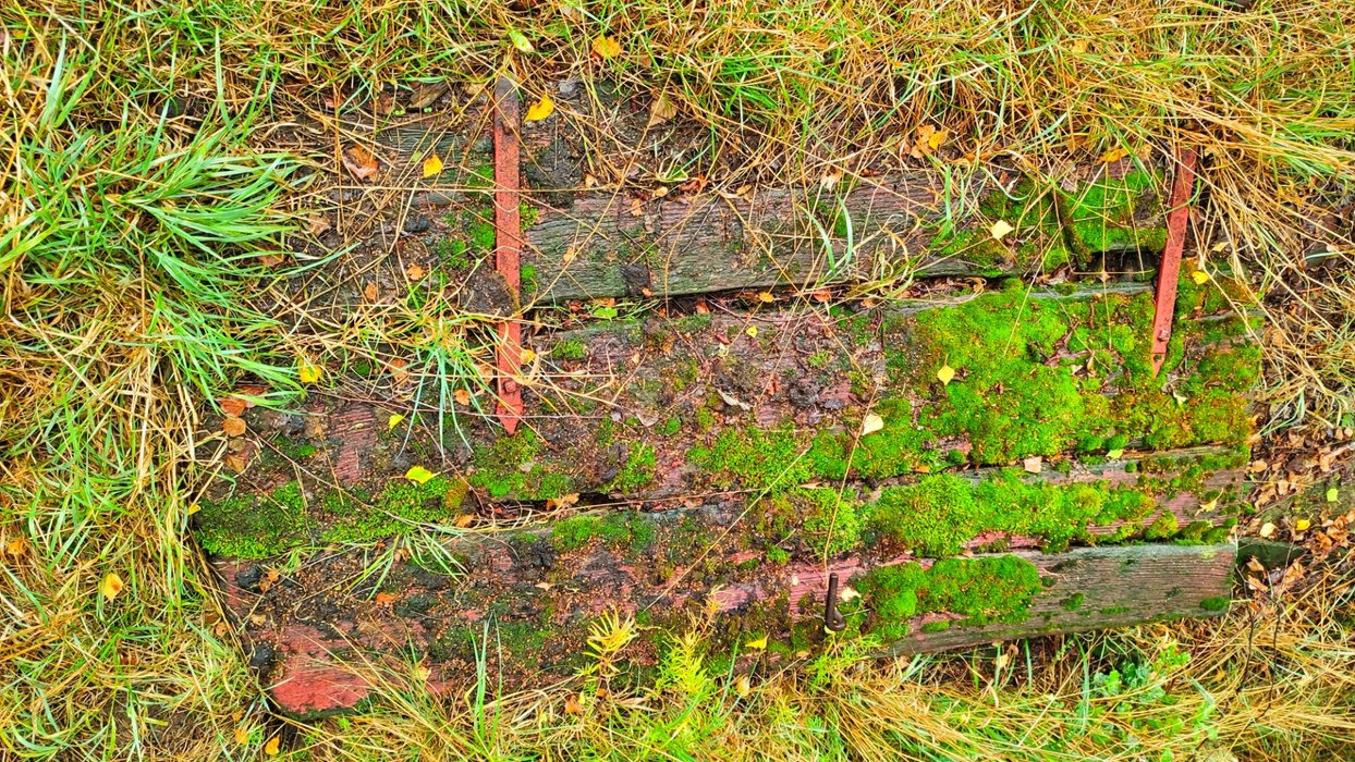 A door, layed down to the earth since years - originally part of the fence.