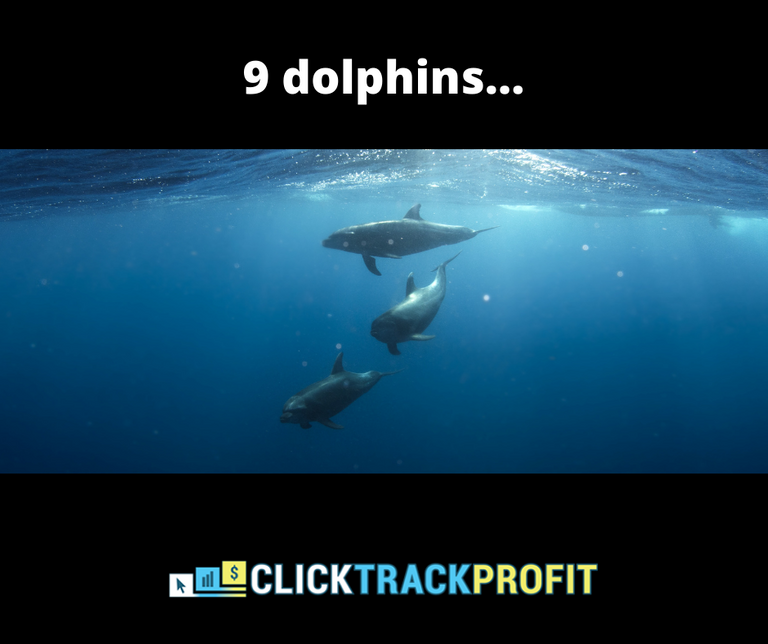 9 dolphins.png