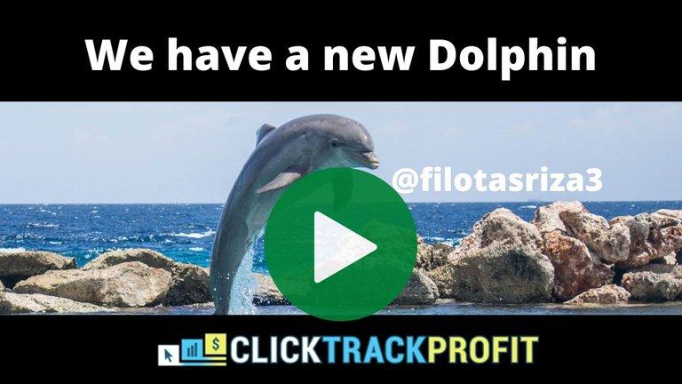 new dolphin_play.jpg