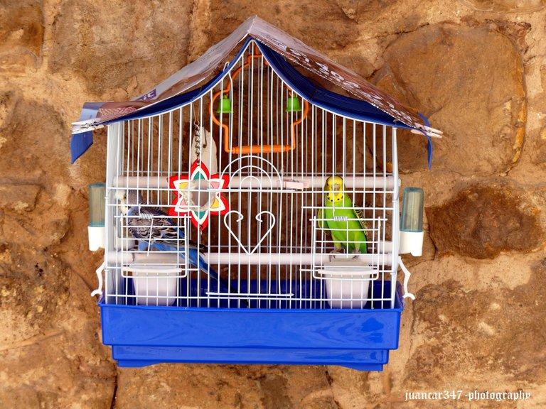 In Vinuesa, you always see parakeets