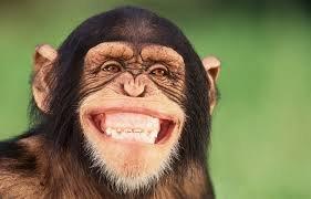 monkey huge smile.jpg